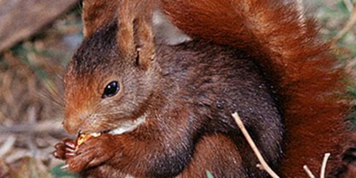 Fauna Ibérica: Animales de España y Portugal