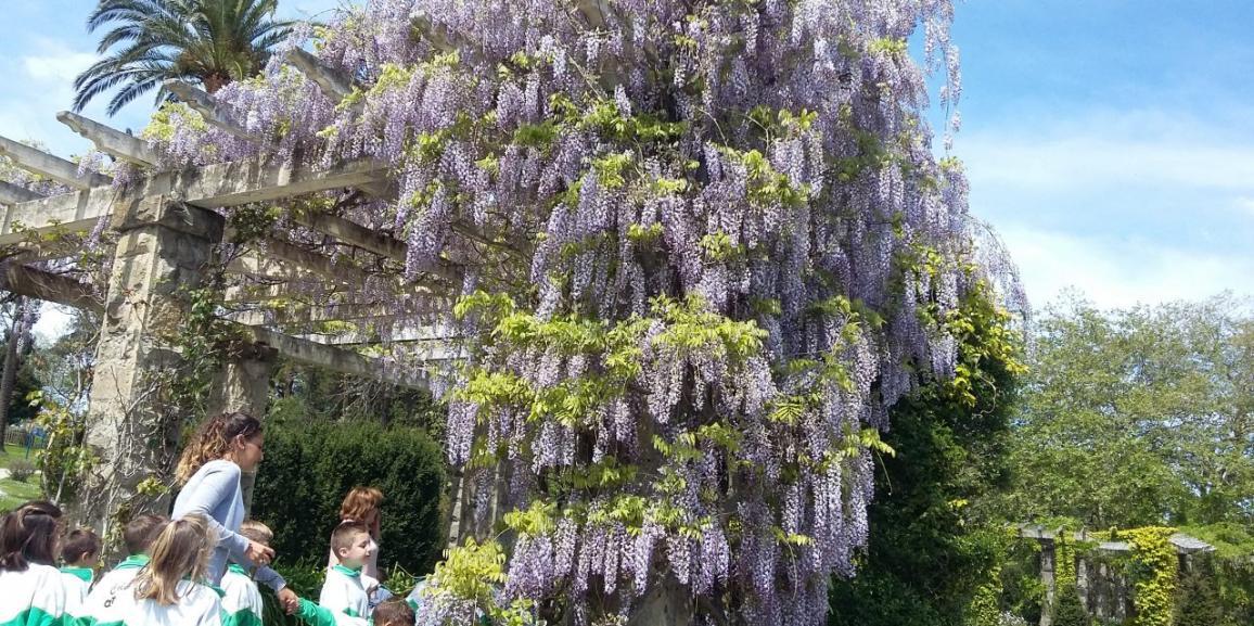 Por fin el miércoles pudimos ver el lilo de Mataleñas lleniiiiito de lilas