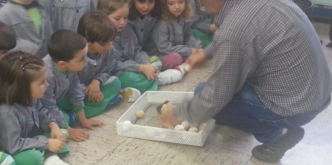 Los pollitos de la clase de 3º y Luis